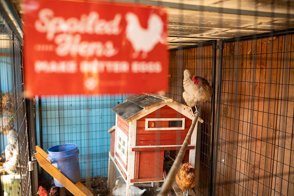Precious Little Lambs chicken coop